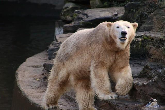 Tierpark Berlin 25.12.2051   28