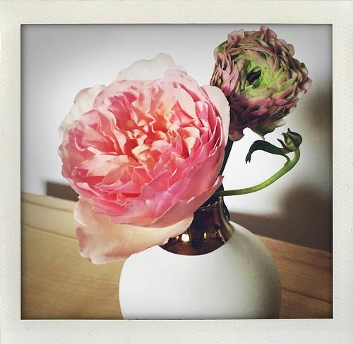garden rose & ranunculus