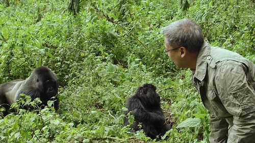 Capt with Mountain Gorillas in Rwanda