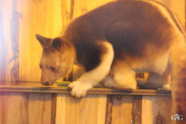Besuch Zoo Rostock 23.01.2016135