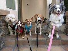 Max, Milo, Rocco, Maddux & Siena