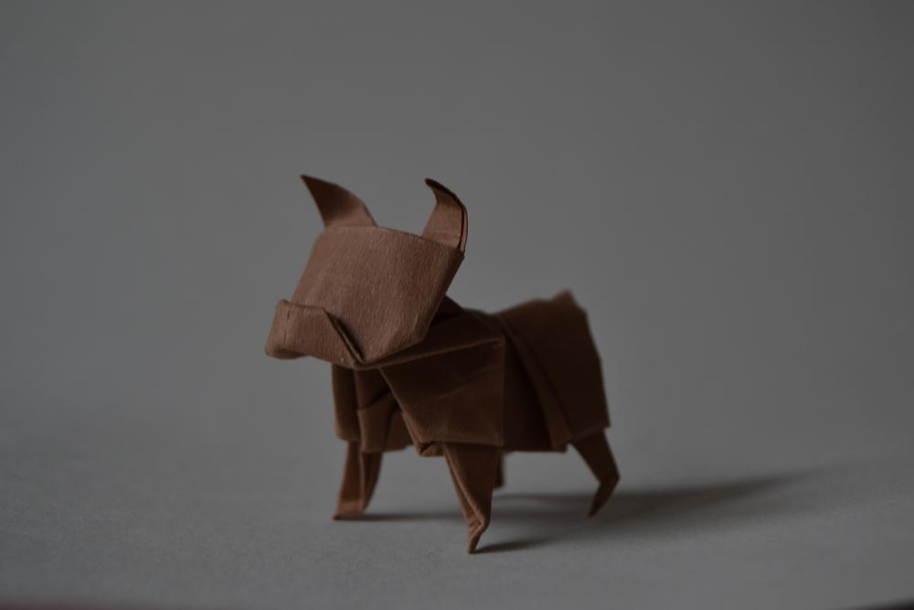 206-origami dollar buldog