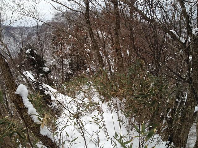 土蔵岳 支尾根 P727への道