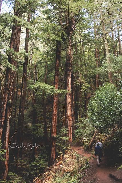 Woods #4
