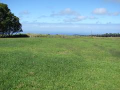 starr-090121-0997-Cyperus_rotundus-habit-MISC_LZ_Piiholo-Maui