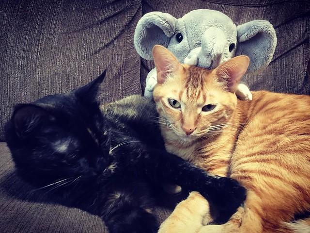 むむっ😾 #cat #cats #catsofinstagram #catstagram #instacat #instagramcats #neko #nekostagram #猫 #ねこ #ネコ# #ネコ部 #猫部 #ぬこ #にゃんこ #フワモコ部