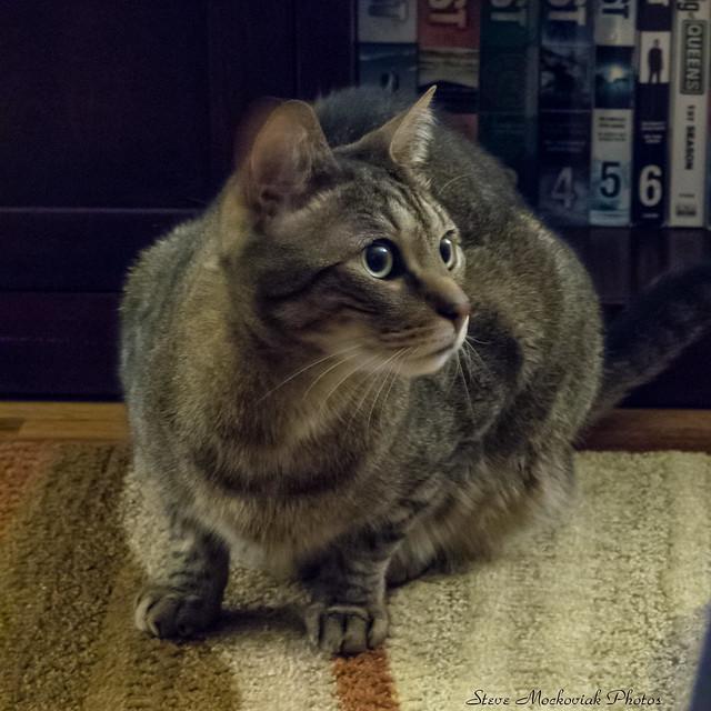 Pez The Cat_13249