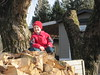 fun on the willow wood pile