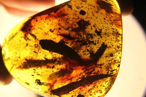 Ethiopia Amber