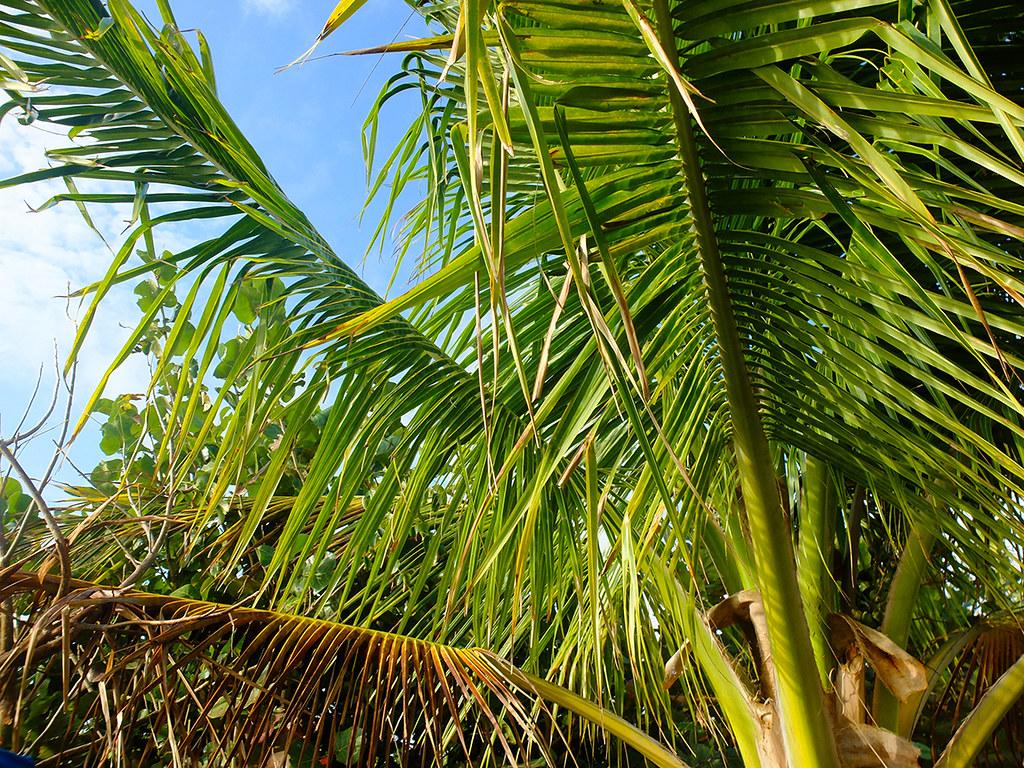 floride-west-palm-beach-(88)