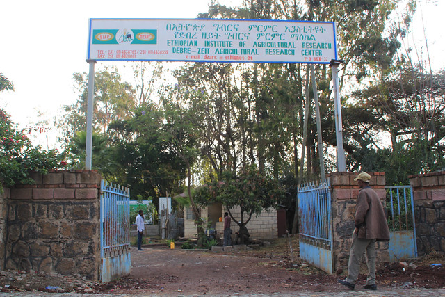 The entrance to the Ethiopian Institute of Agricultural Research – Debre Zeit Agricultural Research Centre