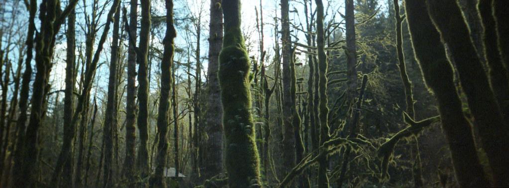 WildwoodTrees