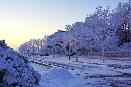 Magic frozen trees, Helsinki