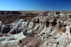 Petrified Logs in Blue Forest, Petrified Forest National Park, Arizona