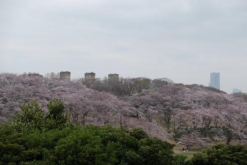 桜の始まり