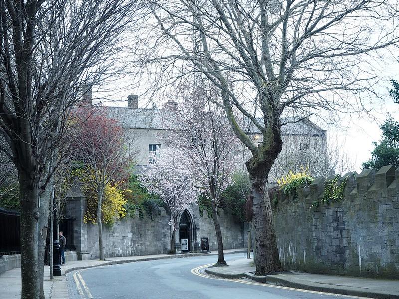 streetsdublinP4150551, street, cherry blossom, dublin, st. patricks cathedral