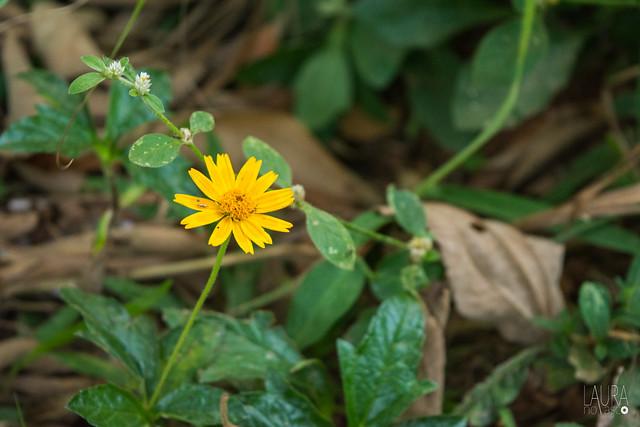Primavera - flores