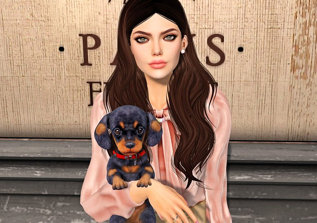 Paris Pup