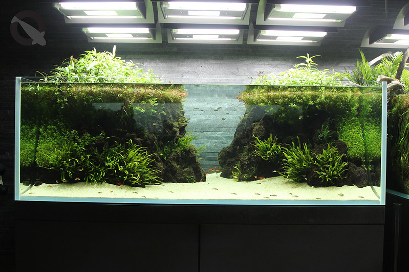 KQ Sumida Aquascape 8