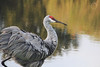 || Backyard Cranes