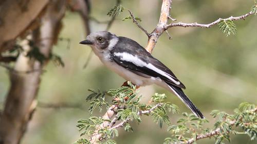 afrique botswana