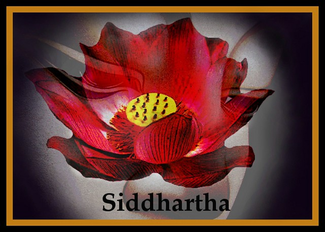 Buddha- Siddhartha and the Red Lotus