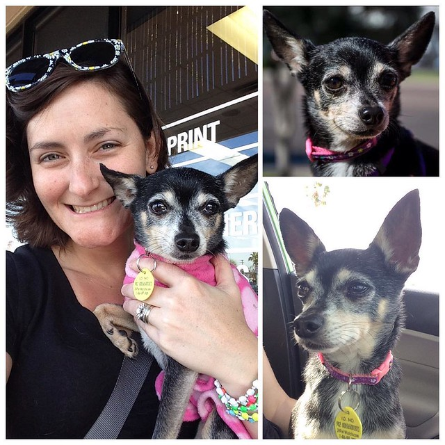 Meet Pia! This little girl is about 7 yrs old and was found playing frogger across 6 lanes of traffic on the streets of Phoenix. She was very skinny, scared, and covered in ticks.   @dhmusicmanagement and I have decided to step in to foster this little gi