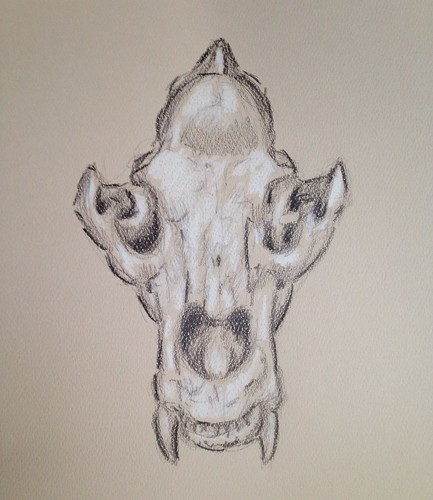 Bear skull in color pencil on color paper.
