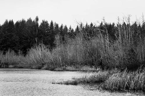 blackandwhite usa lake nature water landscape washington unitedstates northwest pacificnorthwest northamerica blackandwhitephotography photooftheday naturephotography landscapephotography photographersontumblr originalphotographers