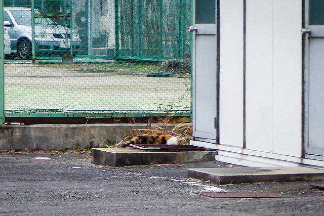 Today's Cat@2016-03-09