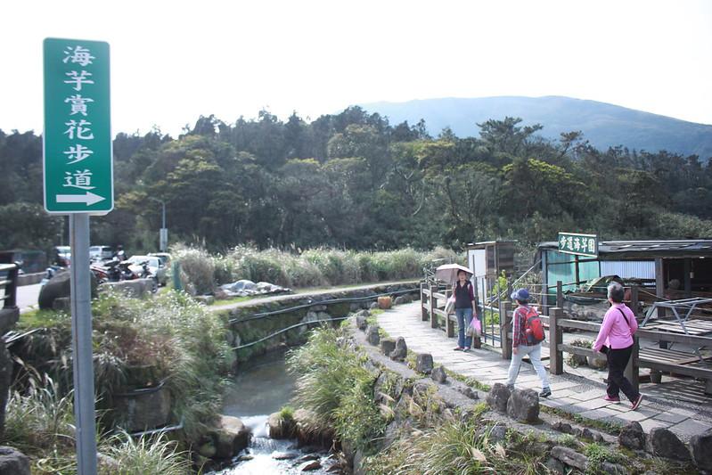 竹子湖採海芋-17度C隨拍 (3)