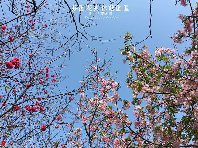 芬園花卉休憩櫻花園區_000
