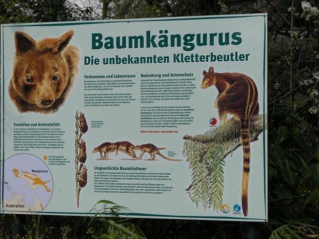 Baumkänguru, Zoo Krefeld