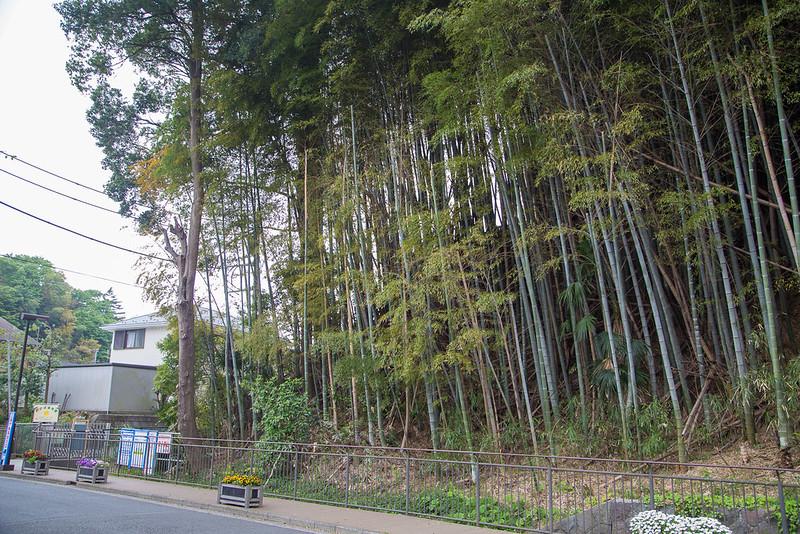 タケノコ掘り-2