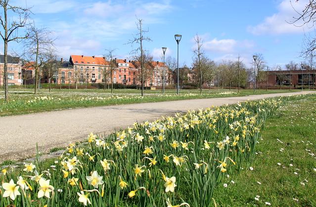 Springtime in Leuven!