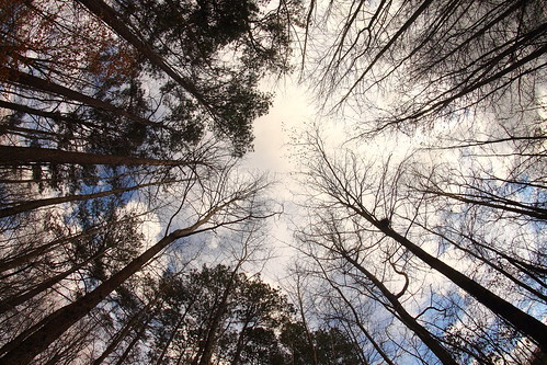 trees sky up clouds woods moody emotion fisheye trail creation concept