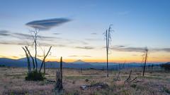 PCT dusk, Mt Shasta