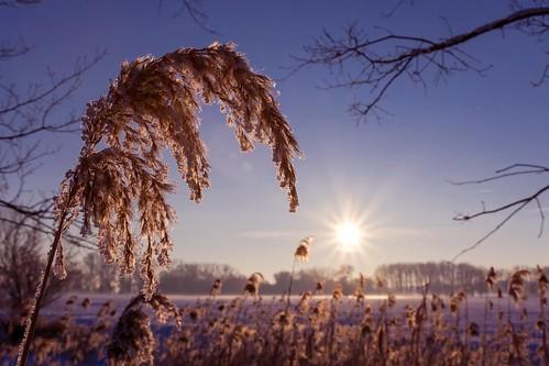 schnee winter sunset sun snow ice germany deutschland nikon sonnenuntergang tamron eis sonne sunbeams dornburg saxonyanhalt sachsenanhalt gommern 1750mm jerichowerland d7200