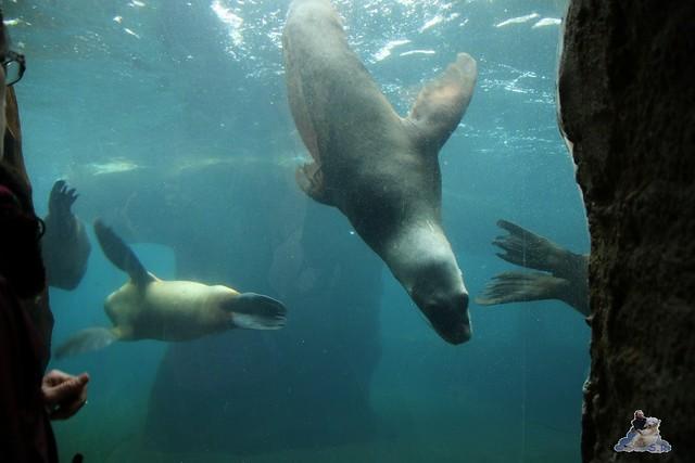 Eisbär Lili im Zoo am Meer Bremerhaven 10.04.2016 Teil 1 36