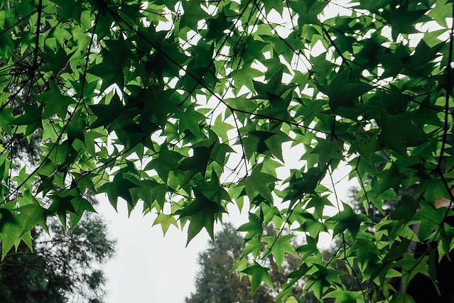 台中 • 薰衣草森林