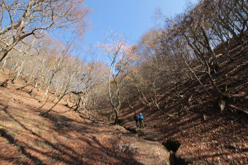 20141122-武奈ヶ岳&京都ライトアップ-0129.jpg