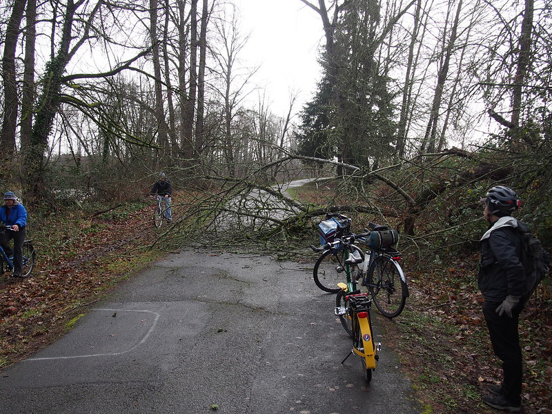Kent at Downed Tree: Kent said this must've happened very recently, as the city is on top of trail maintenance.