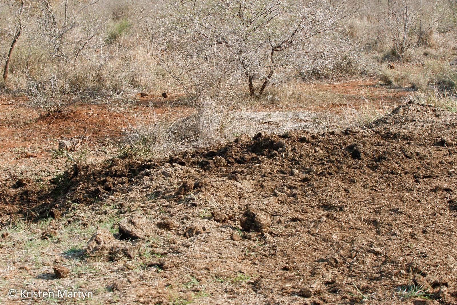 Rhinoceros Midden