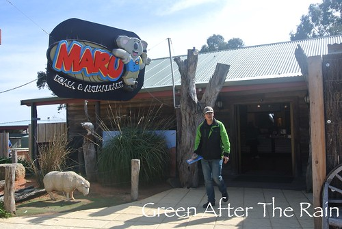 150911g Phillip Island Maru Koala and Animal Park _002