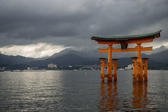 Floating Torii Under a Silvery Light