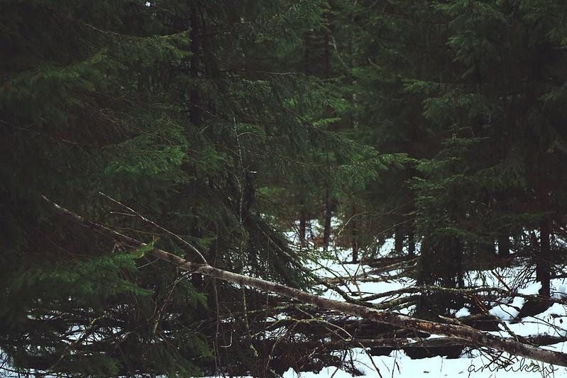 metsäjakuuset