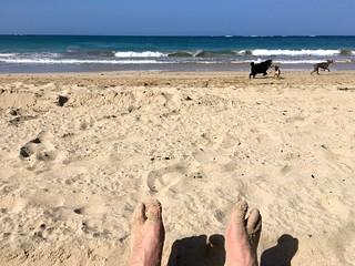 Image of La Playa @ Ocean Park Ocean Park Beach near San Juan. dog beach