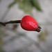 Beautifully red - they still shine! by rotraud_71