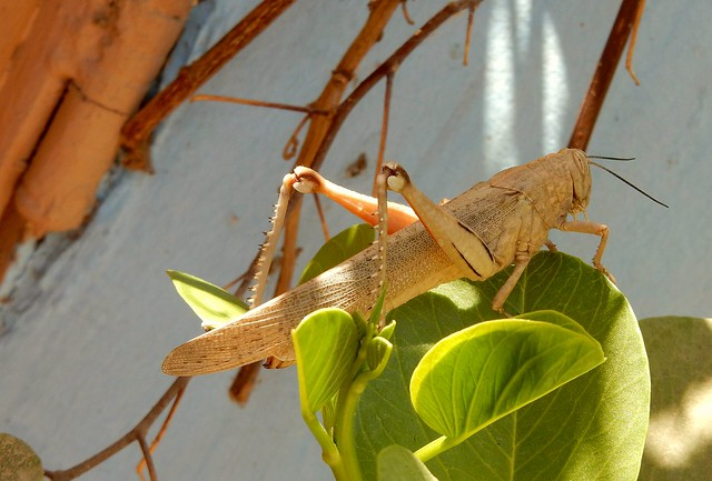More Garden Creatures
