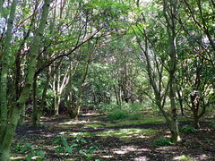 GOC Walthamstow to Stratford 121: Wick Wood, Hackney